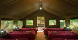 Bush Willow Tented Camp Specials