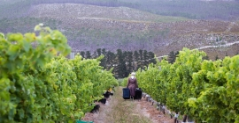 Iona: Choosing Your Wedding Wine