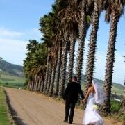 view, wedding venue, palm trees