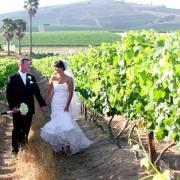 venue, vineyard, winelands