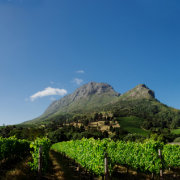 mountain, vineyard