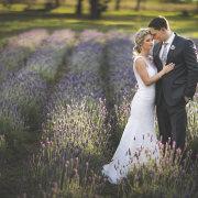 lavender, suit, venue