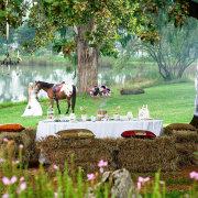 dam, horse, outdoor, venue