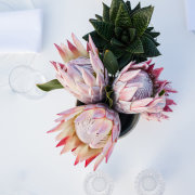 flowers, proteas