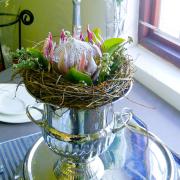 protea, flowers