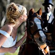 bride, horse