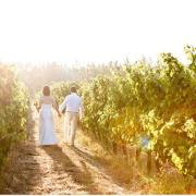 vineyard, winelands