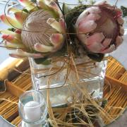 decor, flowers, protea