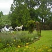 garden, horse caridge