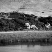 horse caridge, horse cart