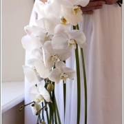 orchid, bouquet, flowers
