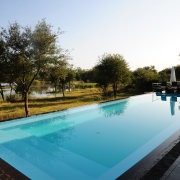 safari, swimming pool