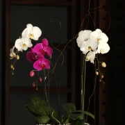 centrepiece, flowers, orchid