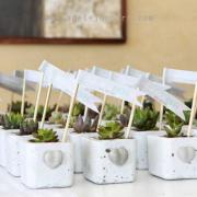 gift, plants