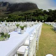 decor, outdoor reception, white, plants