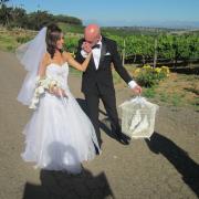 bird cage, bride, doves, groom, white doves, suit, veil, wedding dress