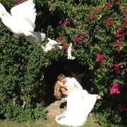 bride, groom, white doves