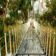 bridge swing